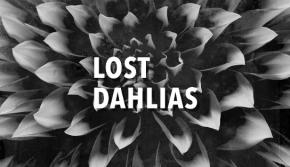Lost Dahlias